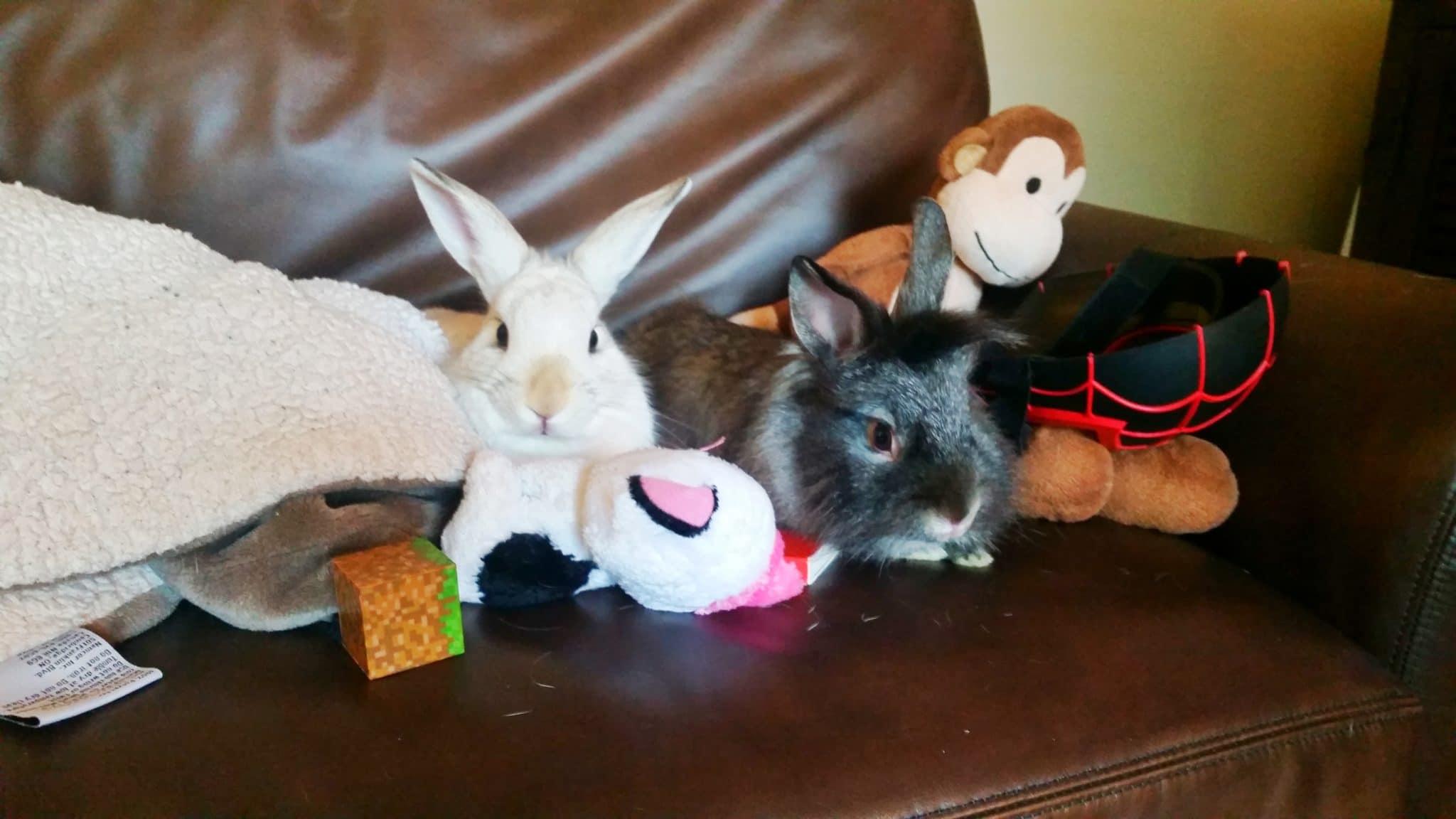consider before getting a backyard rabbit