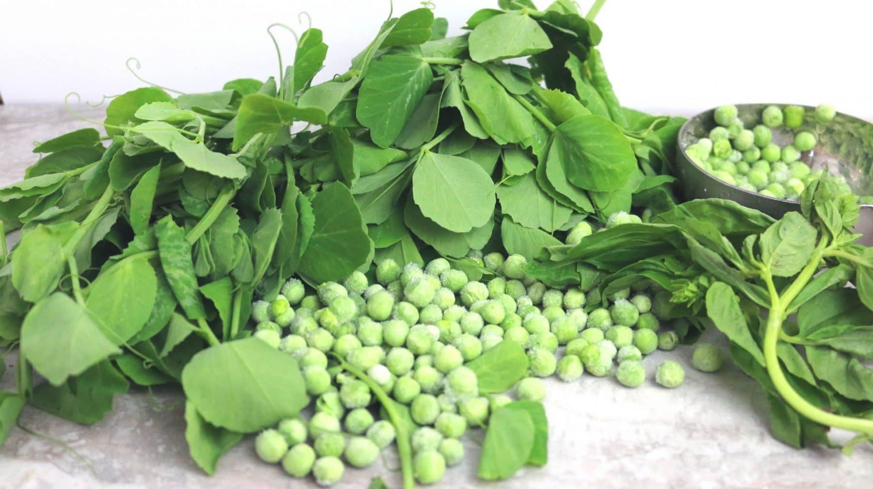 where do pea shoots ocme from