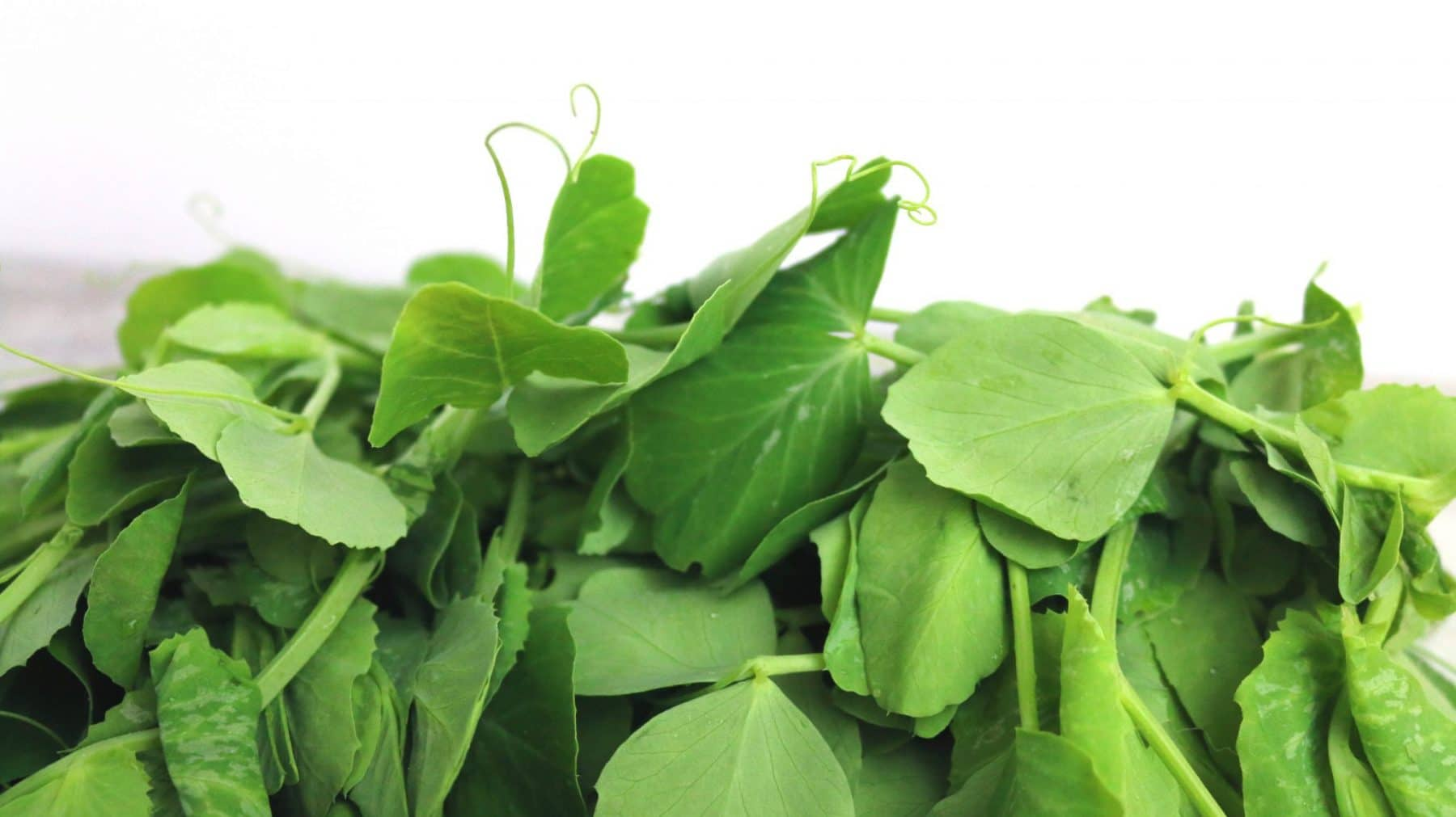 what are pea shoots